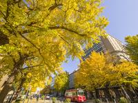 秋の日本大通り 26033005302| 写真素材・ストックフォト・画像・イラスト素材|アマナイメージズ