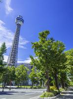 横浜マリンタワーと山下公園通り 26033005312| 写真素材・ストックフォト・画像・イラスト素材|アマナイメージズ