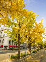 秋の山下公園通り 26033005401| 写真素材・ストックフォト・画像・イラスト素材|アマナイメージズ