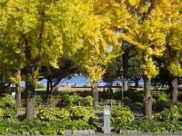 秋の山下公園通り 26033005402| 写真素材・ストックフォト・画像・イラスト素材|アマナイメージズ