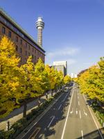 秋の山下公園通り 26033005405| 写真素材・ストックフォト・画像・イラスト素材|アマナイメージズ