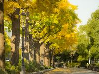 秋の山下公園通り 26033005407| 写真素材・ストックフォト・画像・イラスト素材|アマナイメージズ
