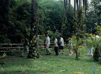 ハルディン・ランカスター植物園内 26034001334| 写真素材・ストックフォト・画像・イラスト素材|アマナイメージズ