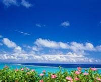 玉取崎より望むハイビスカスと海 26048000198| 写真素材・ストックフォト・画像・イラスト素材|アマナイメージズ