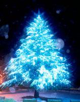 松本歯科大のクリスマスツリー