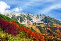 ナナカマドの紅葉と立山