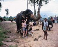 キャンディ郊外象の孤児園にて