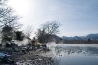 屈斜路湖コタンの湯と白鳥