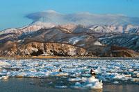 朝日のあたる知床連山と流氷上のオジロワシとオオワシ