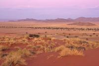 トワイライトのナミブ砂漠