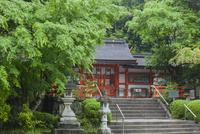 大原野神社の新緑