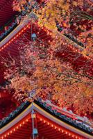 清水寺紅葉 26089005366| 写真素材・ストックフォト・画像・イラスト素材|アマナイメージズ