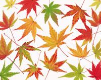 紅葉のイメージ 26092000429| 写真素材・ストックフォト・画像・イラスト素材|アマナイメージズ