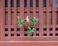 節分 26092001417| 写真素材・ストックフォト・画像・イラスト素材|アマナイメージズ