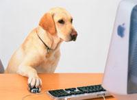 パソコンを見る犬 26092010059| 写真素材・ストックフォト・画像・イラスト素材|アマナイメージズ