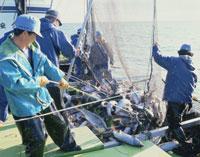 オホーツク海の鮭漁