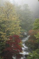 朝靄の阿寒川 阿寒湖滝口 26105003360| 写真素材・ストックフォト・画像・イラスト素材|アマナイメージズ