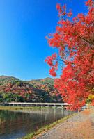 紅葉の嵐山と渡月橋 26105004375| 写真素材・ストックフォト・画像・イラスト素材|アマナイメージズ