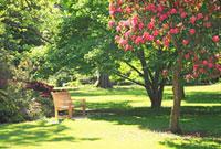 ハグレー公園のクライストチャーチ植物園 26105005139  写真素材・ストックフォト・画像・イラスト素材 アマナイメージズ