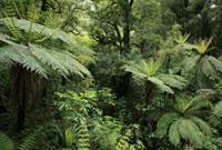 フィヨルドランド国立公園の熱帯雨林の森