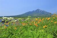 仙法志御崎公園から利尻富士とエゾカンゾウ
