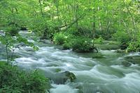 奥入瀬渓流の三乱の流れ