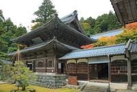 紅葉の永平寺の仏殿