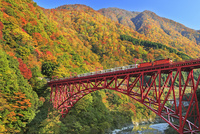紅葉の黒部峡谷と黒部峡谷トロッコ電車 26105015274| 写真素材・ストックフォト・画像・イラスト素材|アマナイメージズ