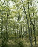 クヌギの木 26110000716| 写真素材・ストックフォト・画像・イラスト素材|アマナイメージズ