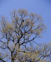 クヌギの木 26110000720| 写真素材・ストックフォト・画像・イラスト素材|アマナイメージズ