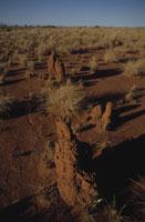 北部砂漠にある蟻塚