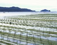 五ヶ所湾の海苔網 26119000251| 写真素材・ストックフォト・画像・イラスト素材|アマナイメージズ
