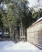 中尊寺竹林 冬の道