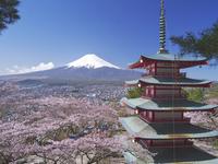 新倉山浅間公園の桜と富士山と忠霊塔 26120014587| 写真素材・ストックフォト・画像・イラスト素材|アマナイメージズ