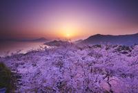 開山公園の日の出と桜