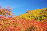 烏帽子岩の紅葉