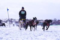 全国犬ぞり稚内大会 26120025366| 写真素材・ストックフォト・画像・イラスト素材|アマナイメージズ