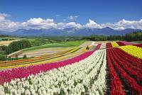 四季彩の丘と十勝岳連峰