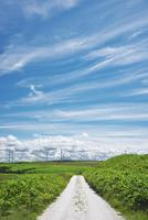 宗谷丘陵の風力発電と白い道
