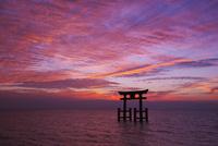 白鬚神社の朝と琵琶湖 26120030309| 写真素材・ストックフォト・画像・イラスト素材|アマナイメージズ
