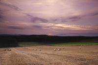 麦わらロールの丘の朝