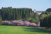 トラピスト修道院と桜 26120039197| 写真素材・ストックフォト・画像・イラスト素材|アマナイメージズ