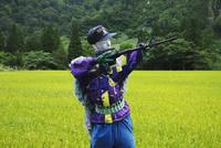 鉄砲を持つカカシと水田