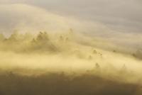 屈斜路湖の木々と雲海