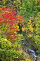層雲峡 紅葉谷の紅葉