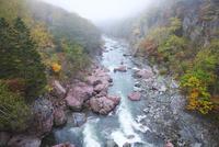 赤岩青巌峡の朝霧と紅葉