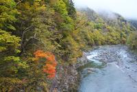 赤岩青巌峡の紅葉
