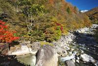新穂高の湯と蒲田川の紅葉 26120041989| 写真素材・ストックフォト・画像・イラスト素材|アマナイメージズ