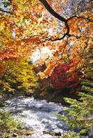 阿寒川の紅葉 26120042026| 写真素材・ストックフォト・画像・イラスト素材|アマナイメージズ
