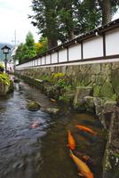瀬戸川と白壁土蔵街 26120042072| 写真素材・ストックフォト・画像・イラスト素材|アマナイメージズ
